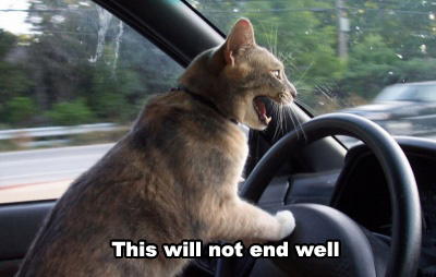 this-will-not-end-well-cat.jpg
